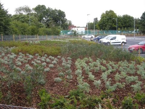 Davis Landscape Architecture Witham Aldi Commercial Landscape Architects Design Image Planting
