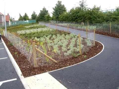 Davis Landscape Architecture Witham Commercial Landscape Design Architects Image Planting Path