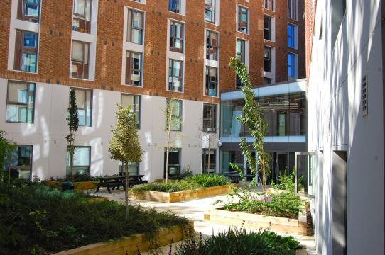 Davis Landscape Architecture Ravenscourt House London Student Accommodation Landscape Architect Courtyard 1