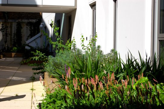 Davis Landscape Architecture Ravenscourt House London Student Accommodation Landscape Architect Courtyard 2 Planting