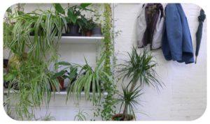 Davis-Landscape-Architecture-Green-Wall